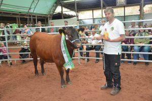 Der Siegertitel aus der starken Gruppe der tragenden Rinder ging an die excellent vorgestelllte Olli-Tochter Mascha Von Karl-Friedrich Flamme , Rhenegge.