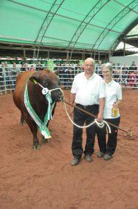 Der Siegertitel ging an den von Holm und Inge Becker , Hommertshausen , ausgestellten Pele , der bei der anschließenden Auktion von einem sächsischen Züchter erworben wurde .